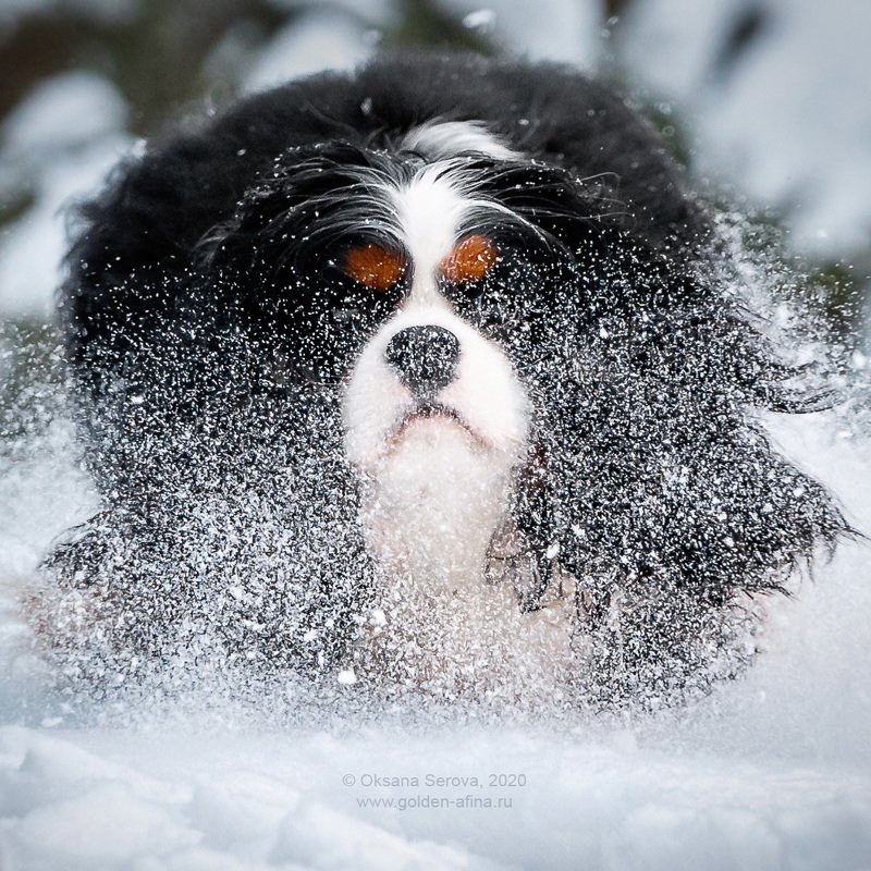 Снежокphoto preview