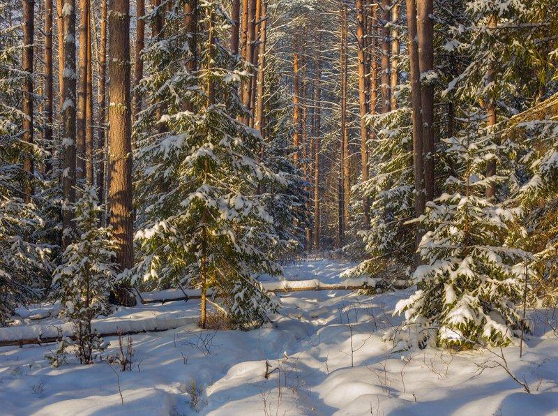 лес январь снег р.суходол Погожий денекphoto preview