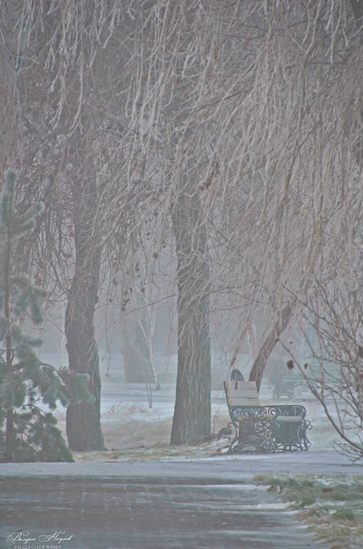 зима, январь, снег, туман, скамейка, парк Кудрявая зима фото превью
