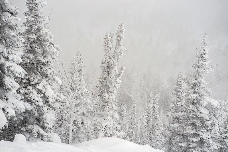 снег, иней, мороз, зима, пихты, кедры, гора зелёная, шерегеш, горная шория, сибирь Pro метельные пейзажи горы Зелёной (2)photo preview