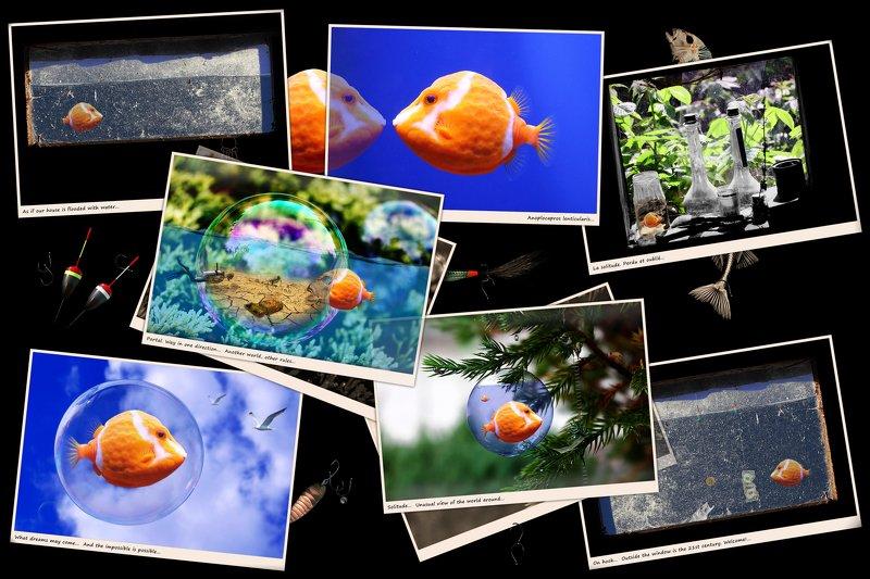 creative, креатив, обработка, концепция, фотоколлажи, фотографии, concept, memory, adventure, photocollages, photogaphy Per aspera ad astra...photo preview