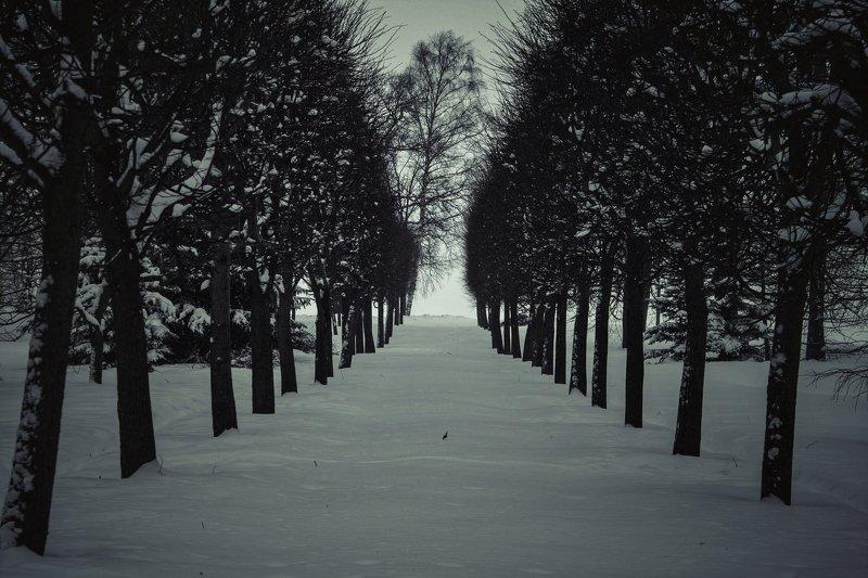 петергоф, дерево, деревья, зима, парк, снег winter parkphoto preview