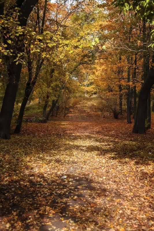 пейзаж, природа, осень, парк, день В осеннем парке городскомphoto preview