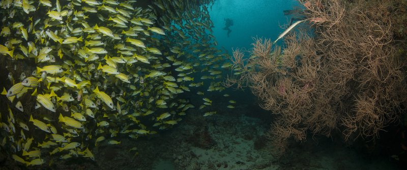 дайвинг, дайвер, рыбы, рыба, океан, мальдивы, подводный, синий, стая, коралл Kuda Raa Thilaphoto preview