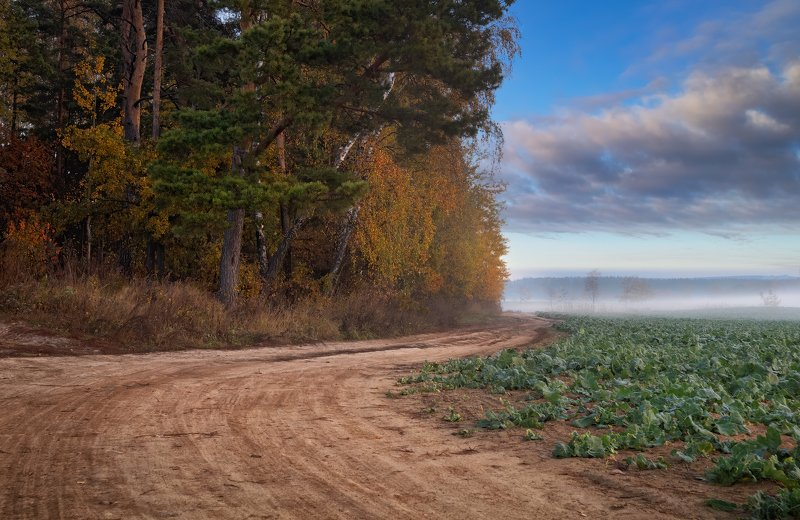 осень, дорога, утро, туман, Утро осеннееphoto preview