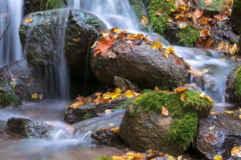 псков, изборск, мельница, вода, ручей, осень, листья, развалины, природа Осенний ручейphoto preview