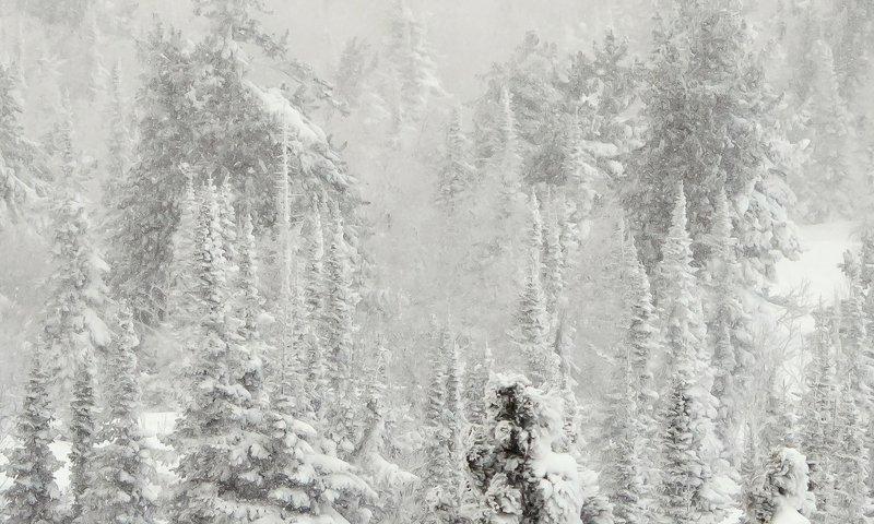 снег, иней, мороз, зима, пихты, кедры, гора зелёная, шерегеш, горная шория, сибирь Pro бескрайнюю гармонию заснеженной сибирской тайгиphoto preview