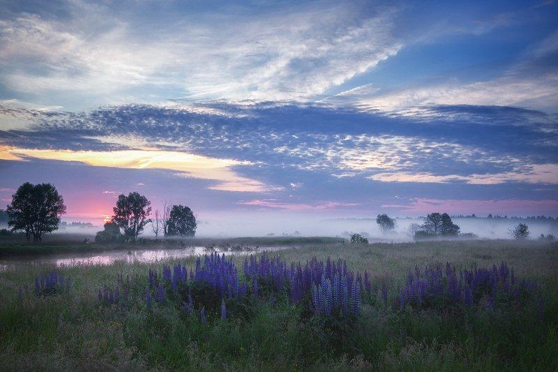 лето, туман, утро, река Летние воспоминанияphoto preview