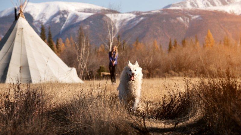 лайка, горы, закат, природа, пейзаж, собака Душа прерийphoto preview