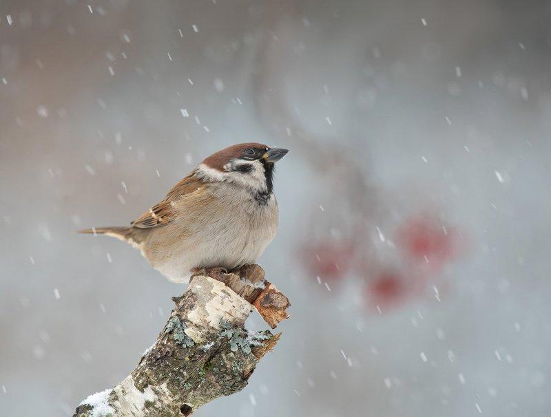 Падает снегphoto preview
