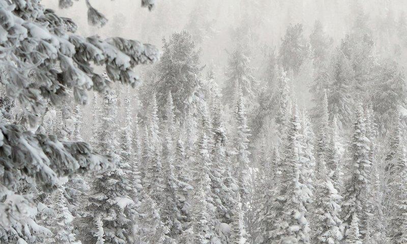 снег, иней, мороз, зима, пихты, кедры, гора зелёная, шерегеш, горная шория, сибирь Pro бескрайнюю гармонию заснеженной сибирской тайги (2)photo preview