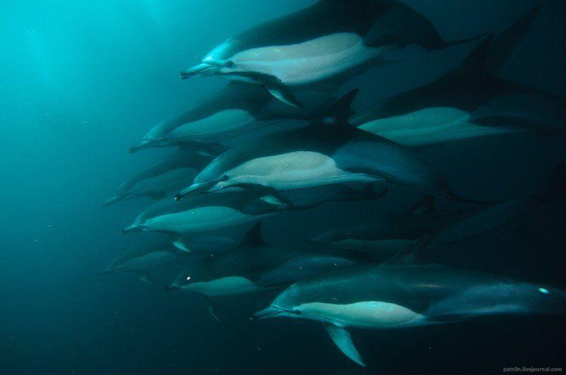 Дельфины, Юар divine creaturesphoto preview