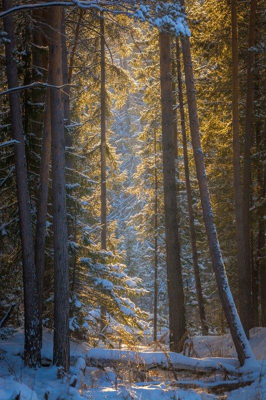 зима лес солнце деревья Солнце в лесу заблудилосьphoto preview