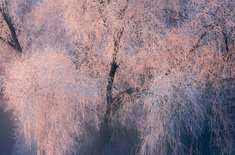 зима, рассвет, река, утро, иней Морозные прелестиphoto preview