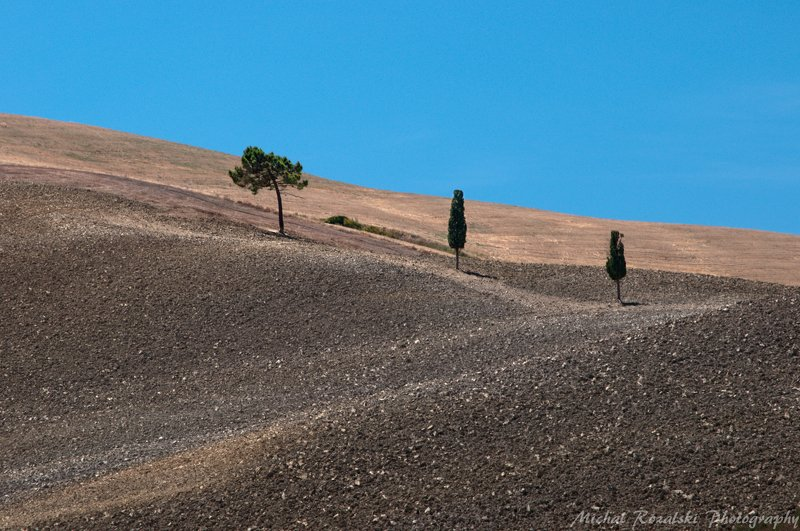cypress, ,tree, ,hills, ,blue, ,sky, ,tuscany, ,landscape Three treesphoto preview