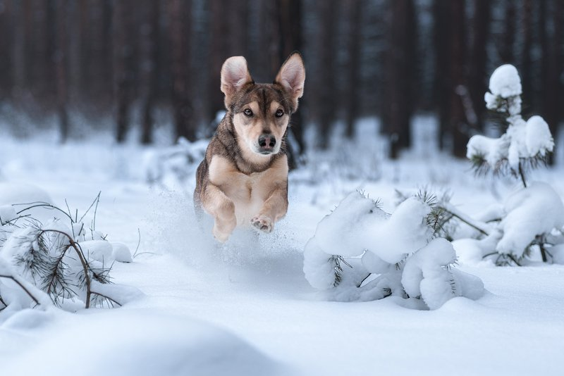 собака Сосредоточенностьphoto preview