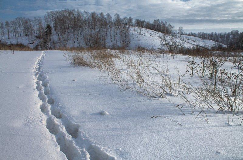 зима, январь *photo preview
