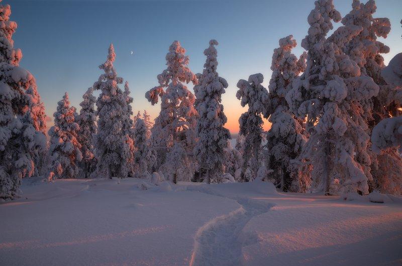 пейзаж,хибины,кольский,север,лес,зима,свет Кольские просторыphoto preview