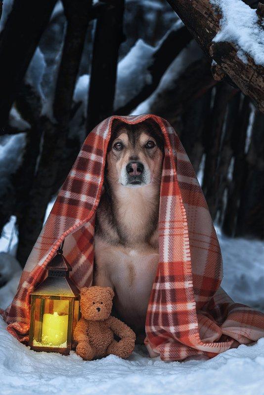 собака Бродяга на привалеphoto preview