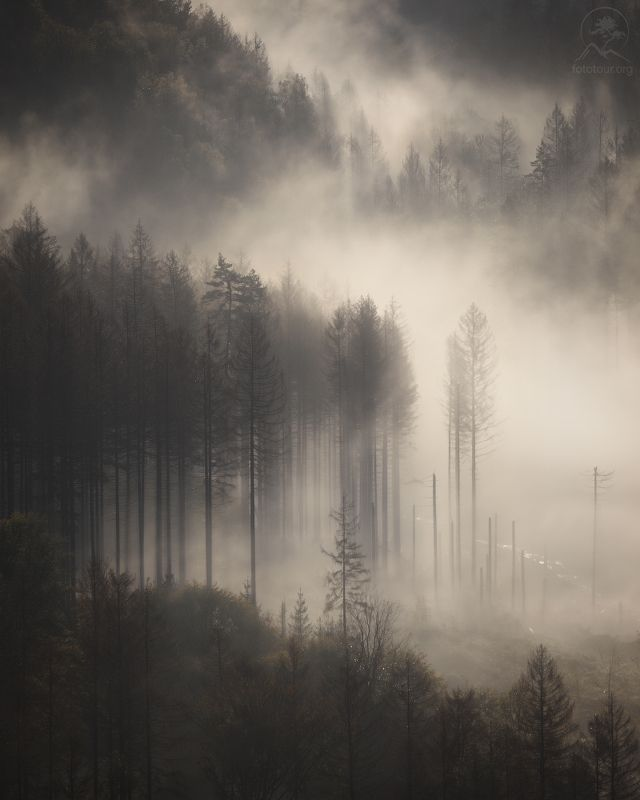 Туманы земли германскойphoto preview