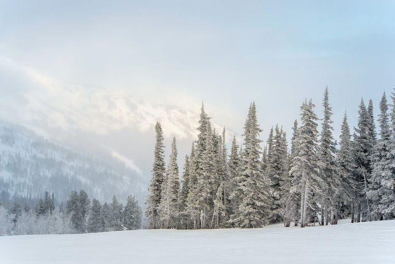 снег, иней, мороз, зима, пихты, кедры, гора зелёная, шерегеш, горная шория, сибирь Прогулки сквозь облакаphoto preview