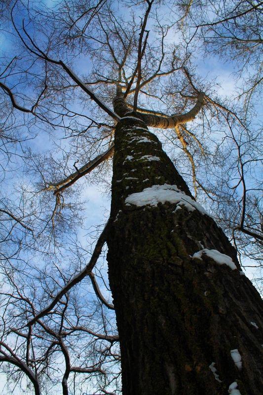 деревья, зима Деревьяphoto preview