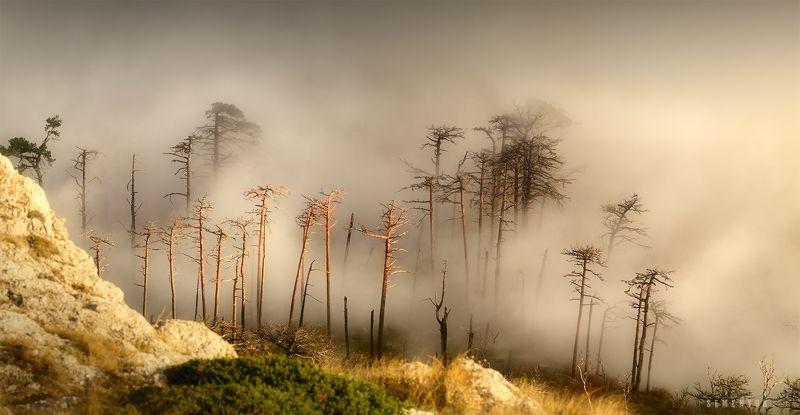 крым, горы, туман, облака, сосны, осень, никитская яйла, природа, пейзаж, mountain, fog, myst, clouds, pine trees, landscape. В рваном одеяле облаков.photo preview