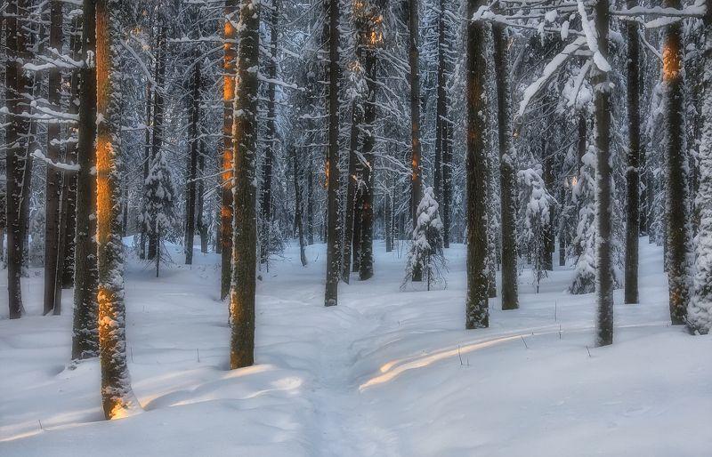 зима лес деревья елки ветки снег сугробы солнце тропинка Тихий вечер, зимний лесphoto preview