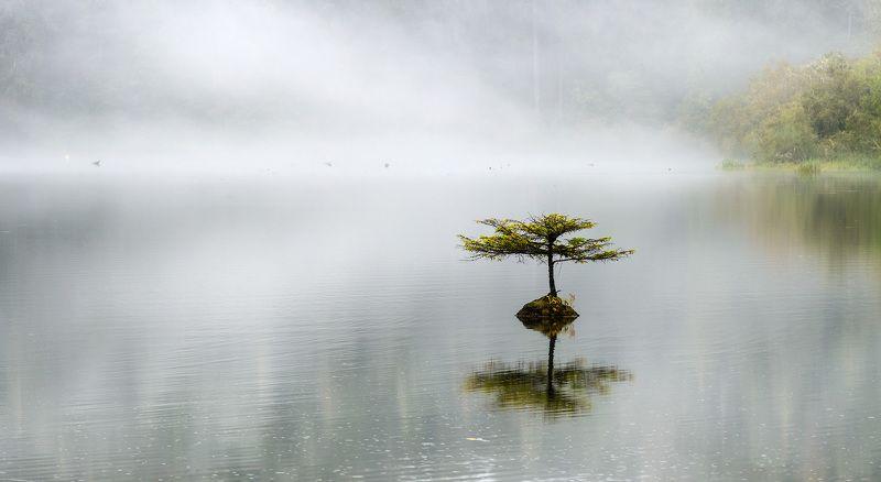 озеро, дерево, вода, туман, пейзаж Одинокое деревоphoto preview