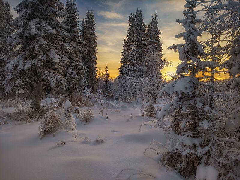 печора,коми,закат Зимний лесphoto preview