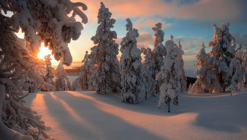 пейзаж,кольский,север,панорама,лес,свет,россия,мурманская область photo preview
