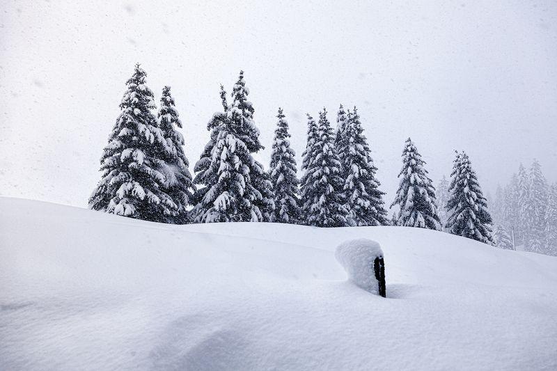 зима, снег, елки, метель, снегопад, пурга, ветер, перескоп *Поднять перескоп*photo preview