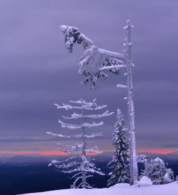 природа, пейзаж, север, кольский, панорама, природа россии, дикая природа, закат, свет, облака, вечер, тундра Суровое заполярьеphoto preview