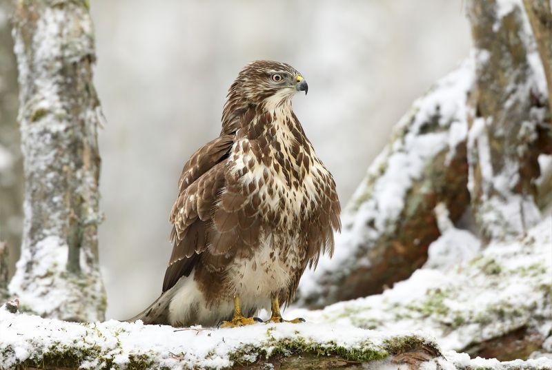 В зимнем лесу.photo preview