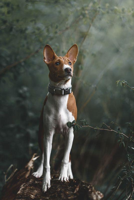собака Твиксphoto preview