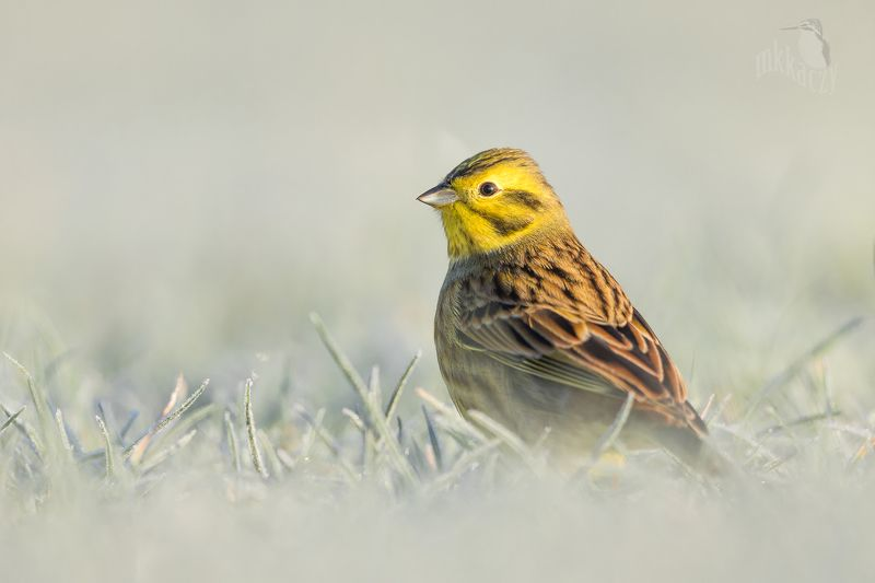 yellowhammerphoto preview