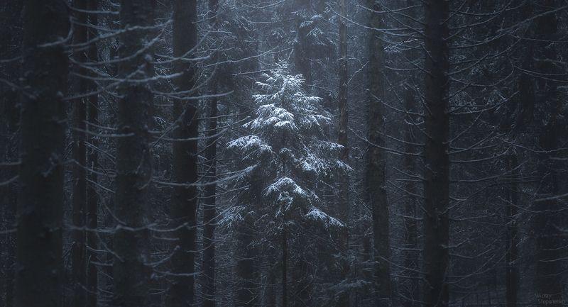 лес, ленинградская область, зима, ель, ёлочка, снег В лесу...photo preview
