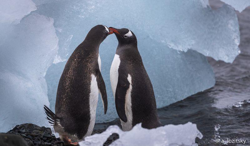 Love in Antarcticaphoto preview