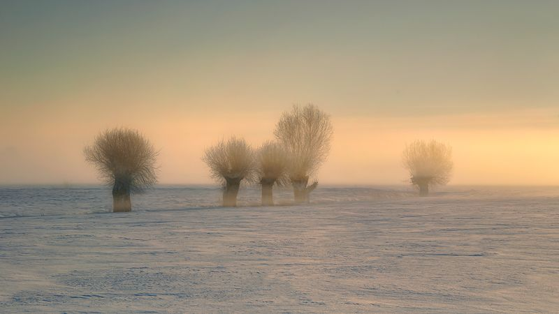 landscape Cold and foggy photo preview