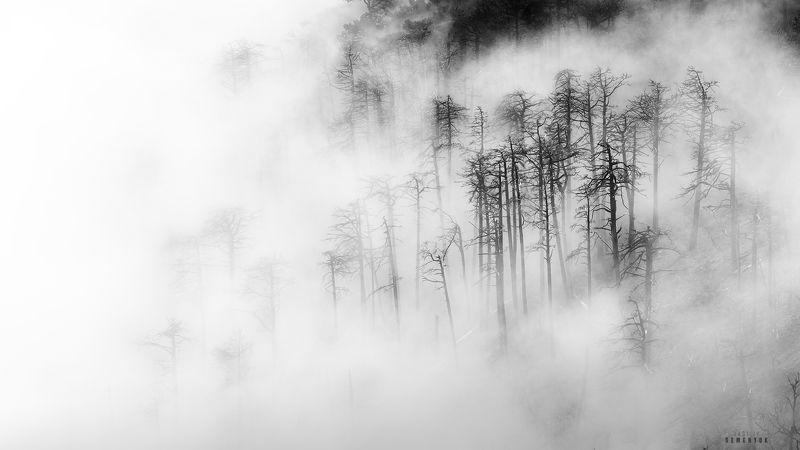 крым, джады-бурун, никитская яйла, горы, сосны, туман, пепелище, ч/б, mountais, fog, clouds, crimea, b/w. Там где из моря рождаются облака.photo preview