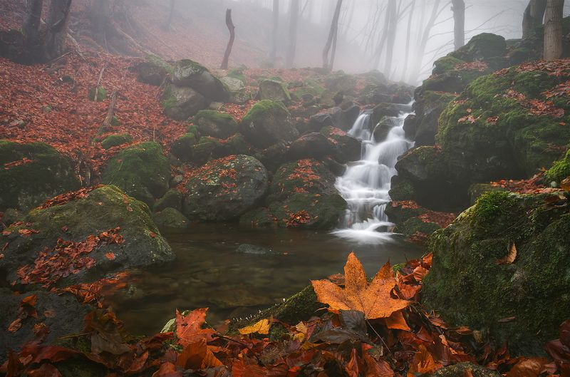 landscape nature scenery forest wood autumn mist misty fog foggy river waterfall colors mountain vitosha bulgaria туман лес Late fall / Поздняя осеньphoto preview