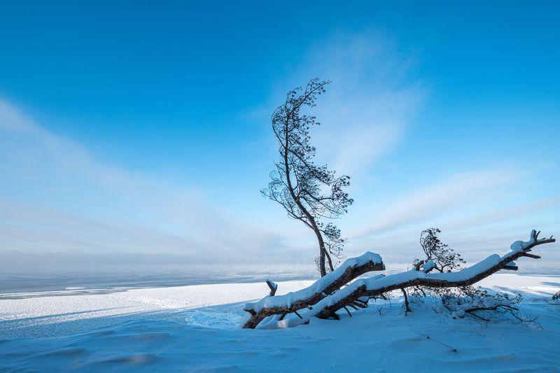 зима снег пейзаж дерево море  Парусphoto preview