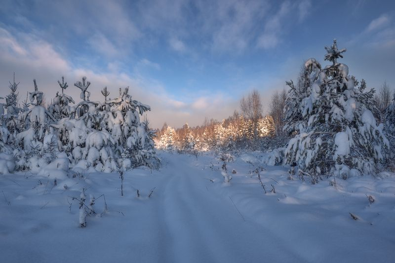 зима,утро,снег,деревья,свет,небо,облака,мороз зимнее утроphoto preview