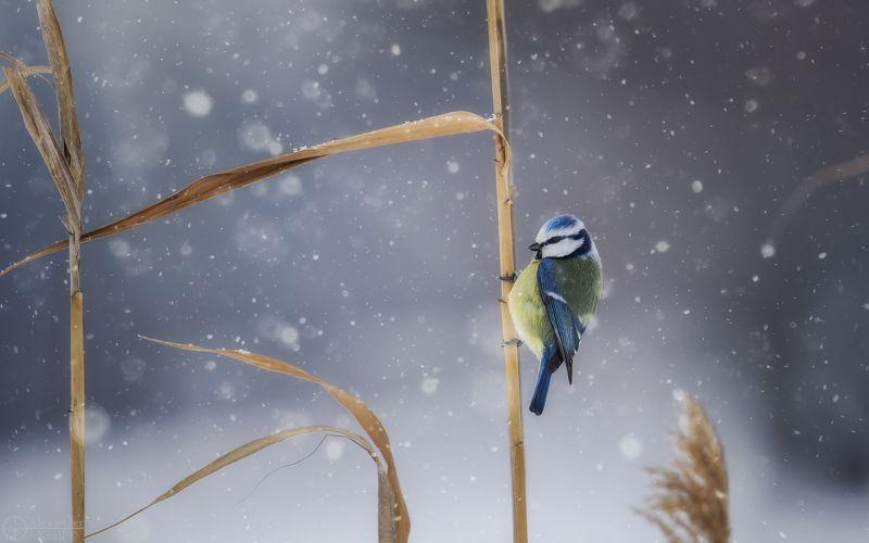 Зимняя синичка...photo preview