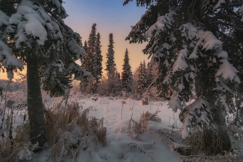 печора,коми,закат Зимний лес севераphoto preview