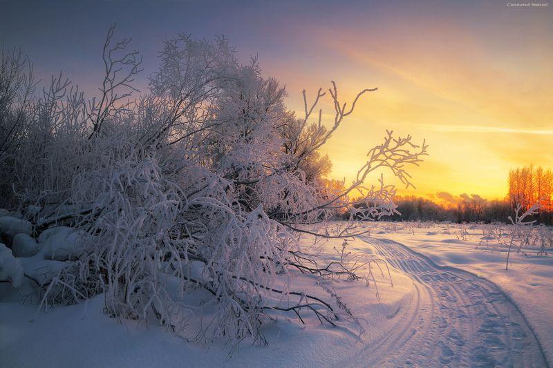 зима, закат, иней, мороз, холод, кусты В морозных оковахphoto preview