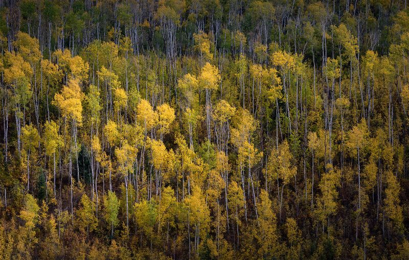 Осень в Колорадоphoto preview