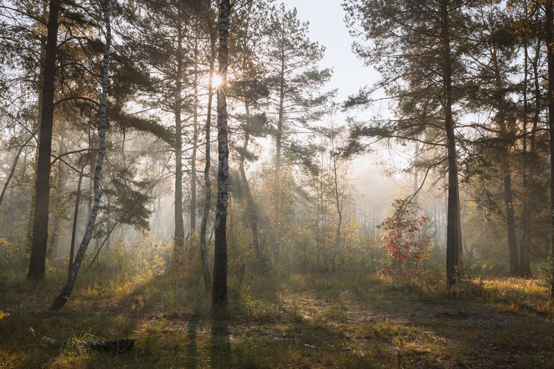 лес, осень, октябрь, утро, туман В пелене туманаphoto preview