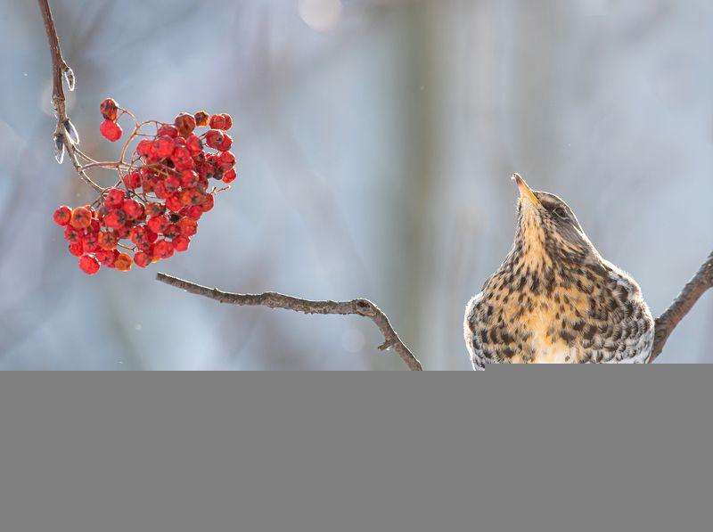 птицы,природа, зима Жизнь удаласьphoto preview