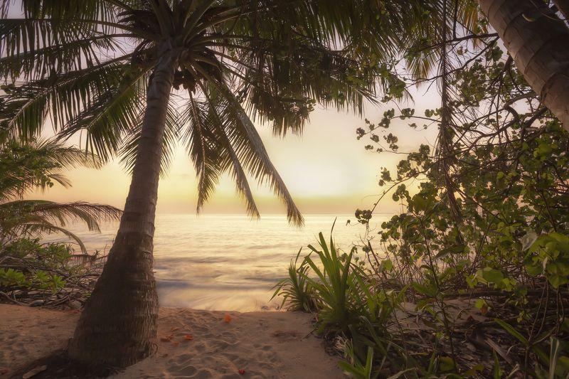 sunrise, maldives, ocean, paradise, мальдивы, рассвет, coco palm dhuni kolhu Sunrise in Maldivesphoto preview